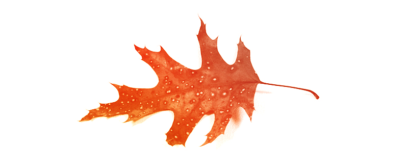 Add Design Flourishes To Your Works with Free Autumn Photoshop Brushes - featured