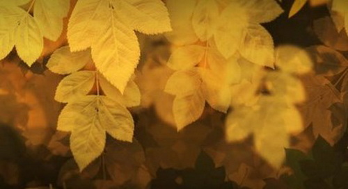 High Resolution Leaf Brushes