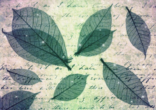 Wings Leaves