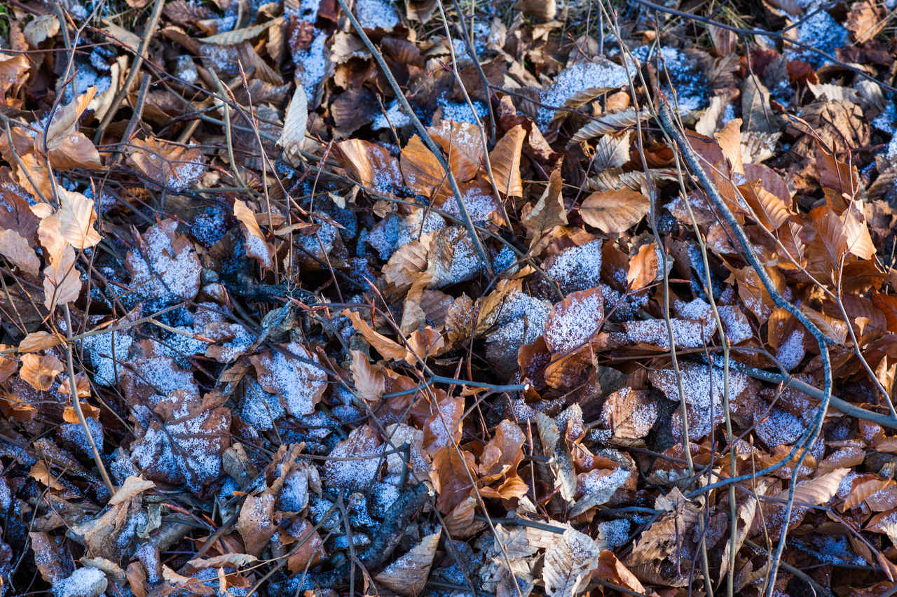 winter-leafs-free-texture