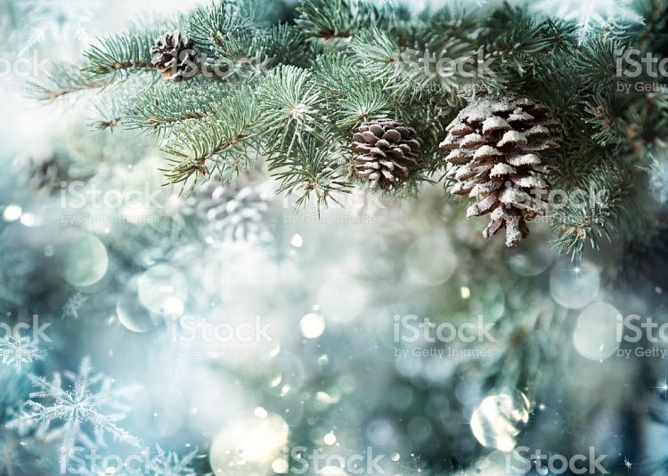 Fir Branch With Pine Cone And Snow Flakes - Stock Image