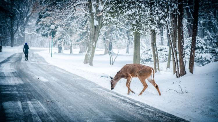 Free Stock Photo of Animal Deer Road