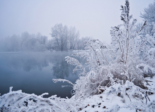 Winter Fog Free Stock Photo
